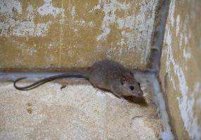 St. Louis Pest Control Tips